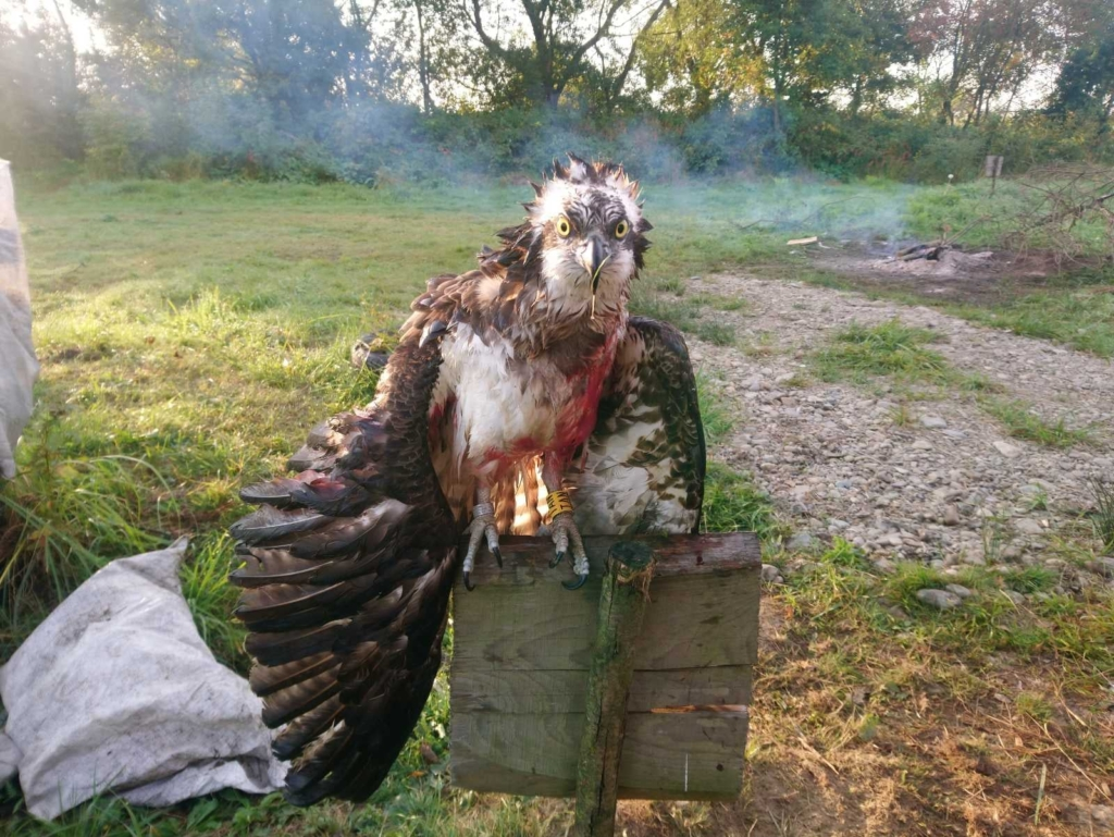 На Прикарпатті розшукують браконьєра, який убив рідкісного птаха 1